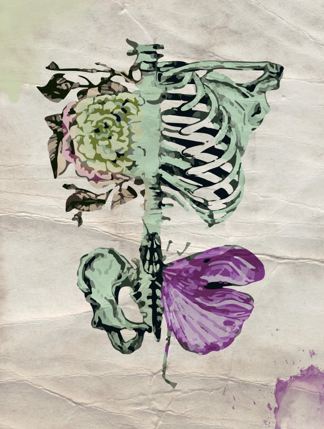 BonesStudy2
